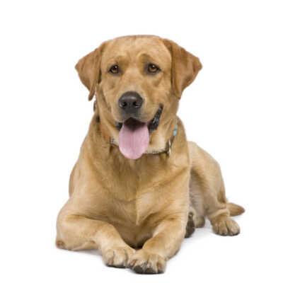 Dog Caretaker Name