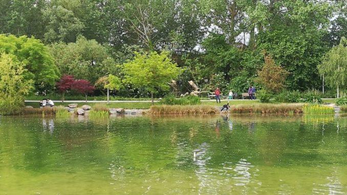 Lago de Sarriguren